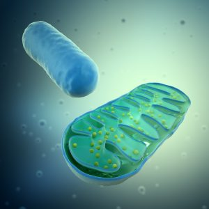 Mitochondria, Aging and PBM