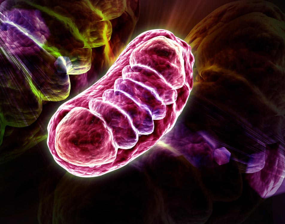 Mitochondria producing more ATP through photobiomodulation
